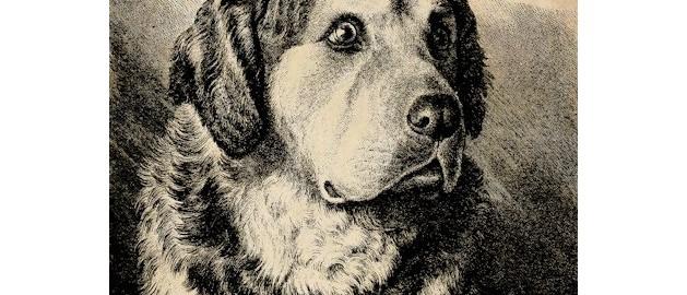Վայրի շունը